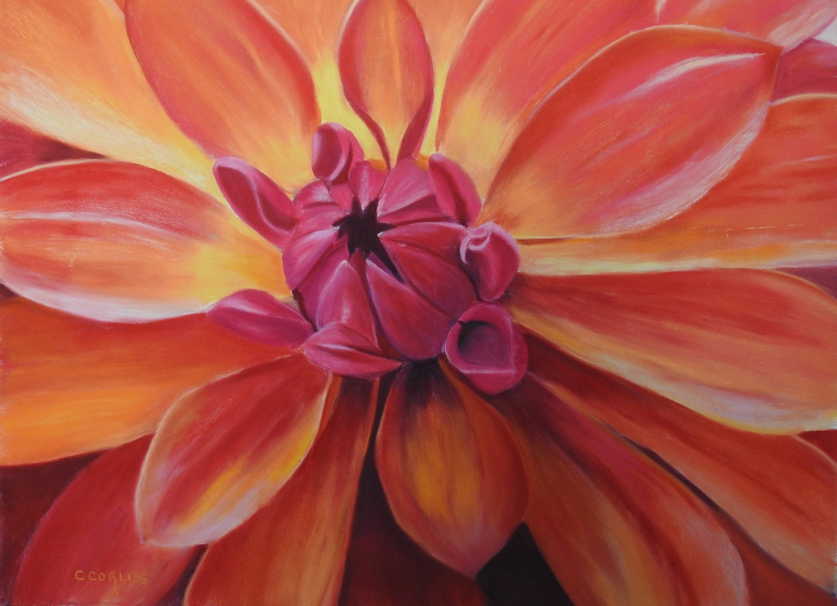 Carol Corliss, Sunset Dahlia (1)